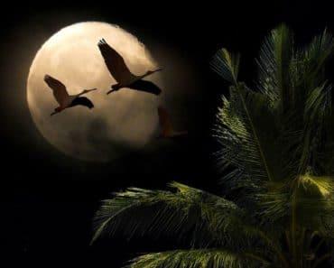 La Luna Nueva del 30 de Agosto nos devuelve a la realidad