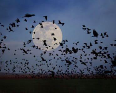 La Magia de la Luna llena del 13-14 Septiembre 2019