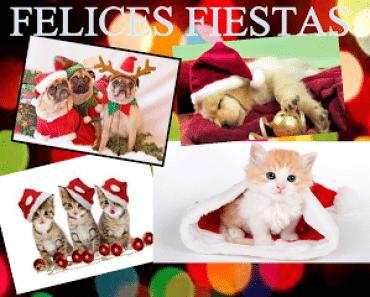 Frases de Navidad para felicitar