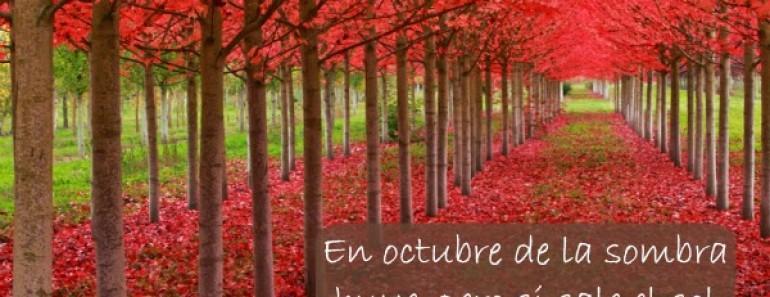 20 refranes sobre el mes de octubre