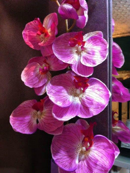 Flores de Bach: Esencias florales y sus cualidades