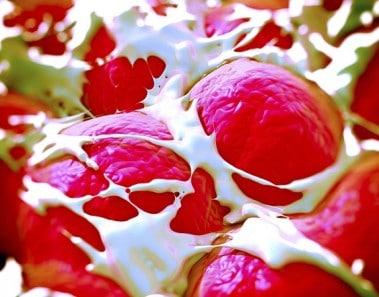 huesos-cartilagos-2B-25281-2529