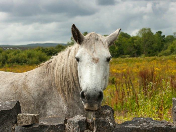 casa rural caballo
