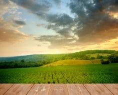 granja familiar campo