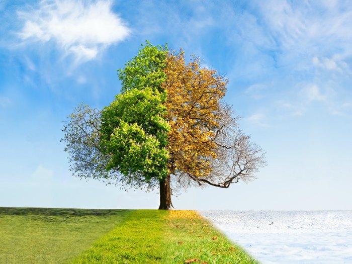 refranes del tiempo por meses árbol