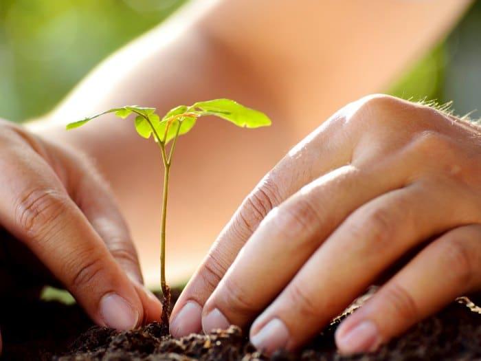 Plantar un rbol rural for Como se planta la lavanda