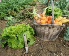 Cultivar alimentos en casa