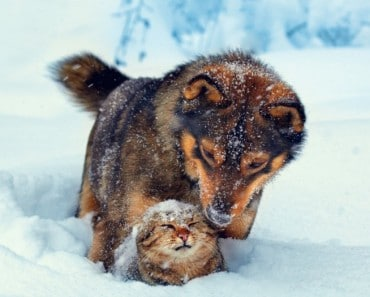 amistad-diferentes-animales1