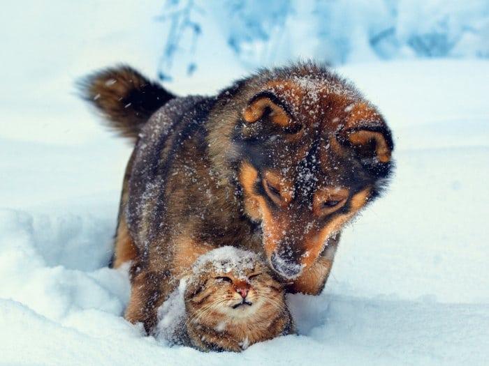 Amistad entre diferentes razas de animales