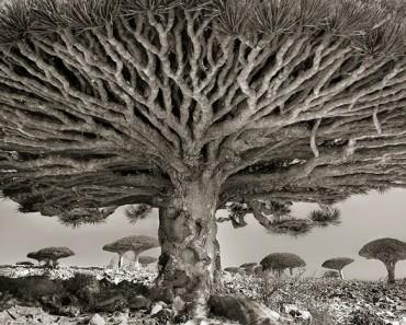 ancient-trees-beth-moon-811
