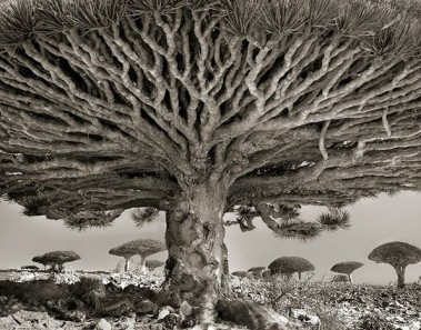 ancient-trees-beth-moon-811