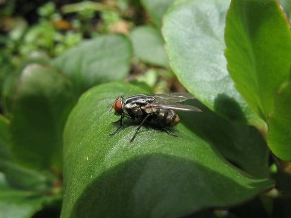 14 plantas que repelen insectos no deseados rural - Ahuyentar moscas exterior ...