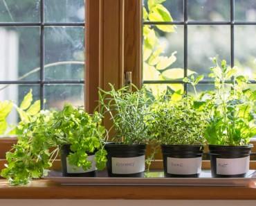 14 plantas que repelen insectos no deseados