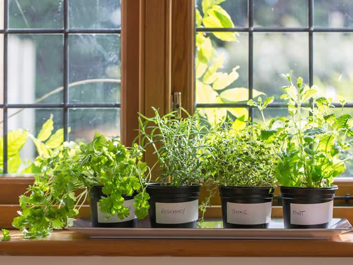 plantas que repelen insectos