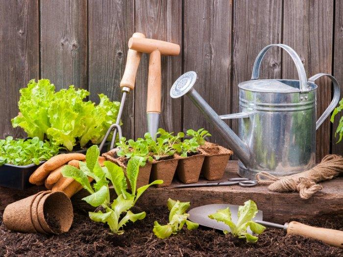 germinar lechuga sin semilla jardín