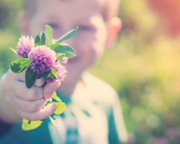 Las Flores de Bach usos y sanación energética