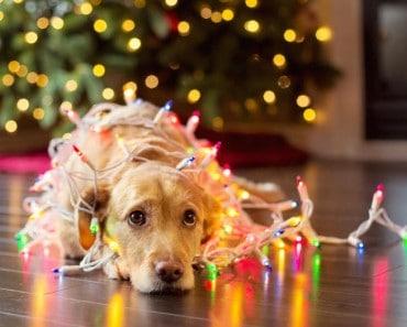 Nadie debería sentirse triste en Navidad