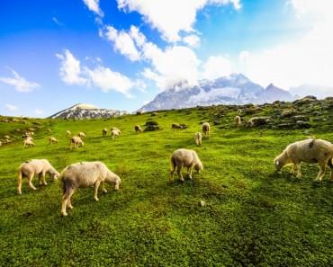 Hablando con las ovejas