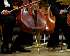 Double bassists members of an orchestra are preparing for concert