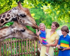 pronunciación de los animales en inglés
