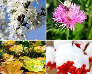 ¿Cómo se pronuncian las estaciones del año en ingles?