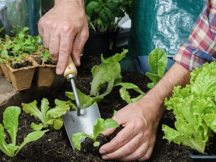 Trucos caseros de jardinería