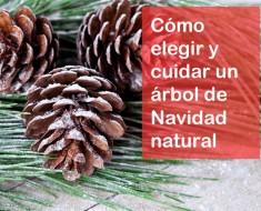 elegir-arbol-navidad-natural