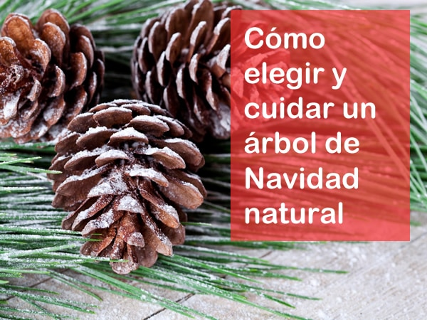 elegir y cuidar un árbol de Navidad