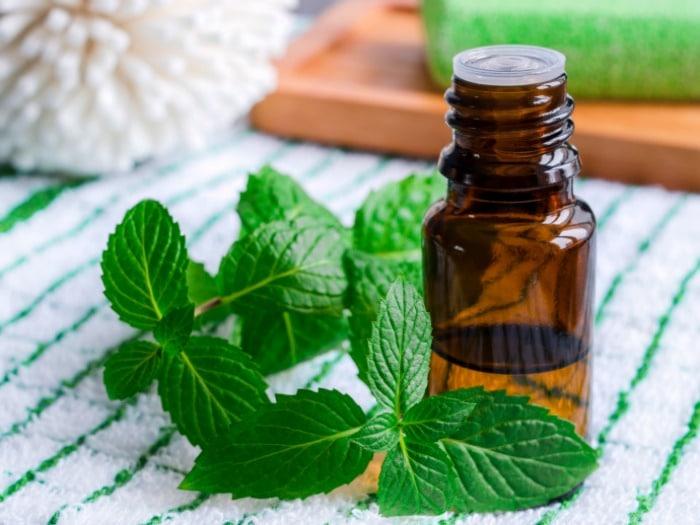 Cómo hacer aceite esencial de hierbabuena
