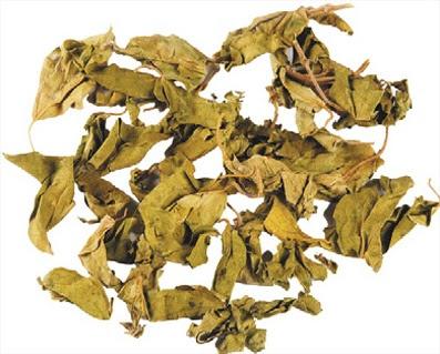 hojas de gurma