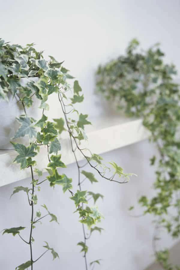 Plantas que ayudan a dormir y purificar el aire