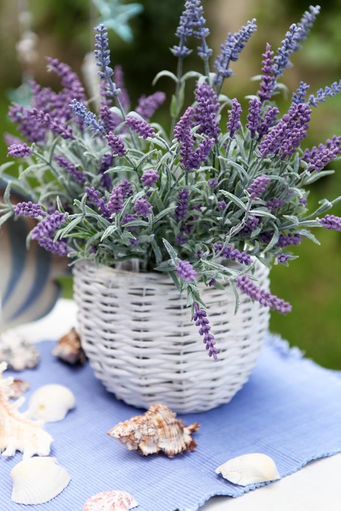 Plantas que ayudan a dormir y purifican el aire