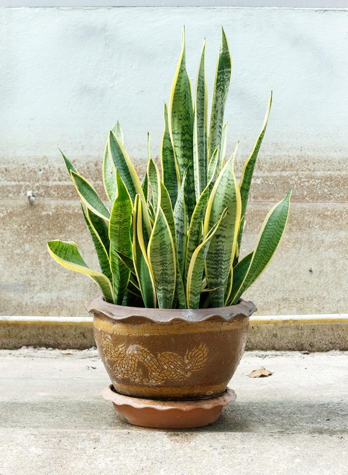 Plantas que ayudan a dormir y purifican el aire de casa