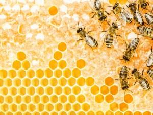 Picaduras de abejas o avispas ¿qué hacer?