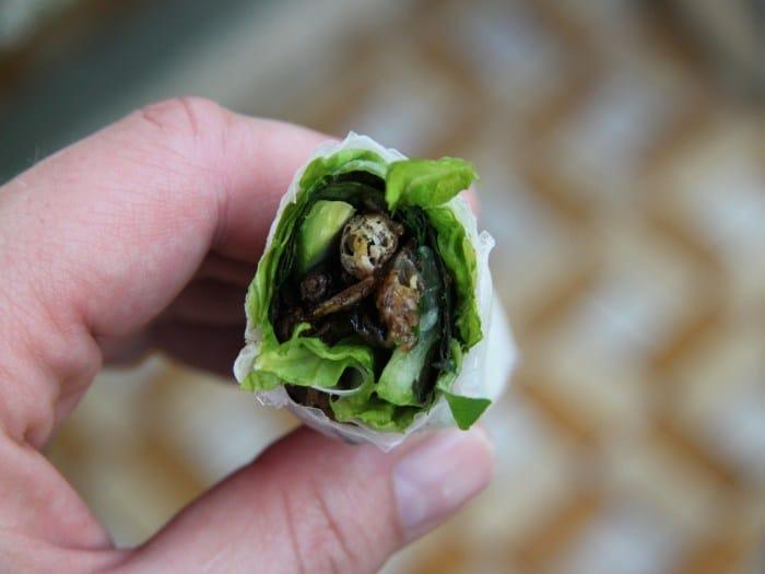 Beneficios de comer bichos