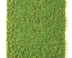 musgo-verde-profilo