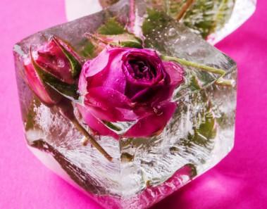 Rosa en hielo