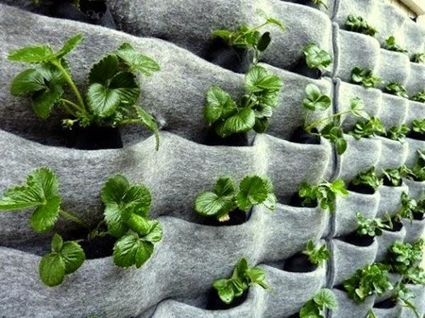 20 ideas sorprendentes para hacer jardines verticales en for Plantas utilizadas en jardines verticales