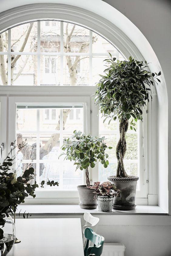 ideas-decoracion-ventanas-euroresidentes