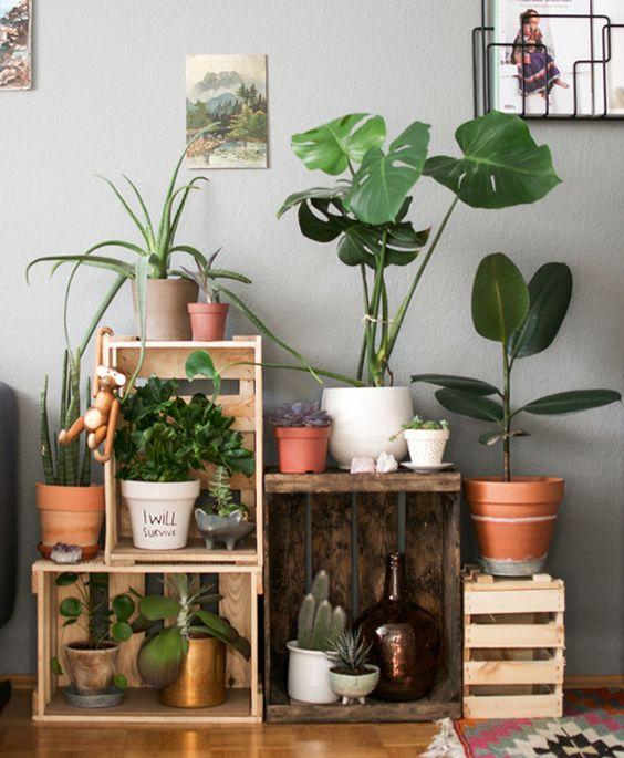 organiza las plantas en un rincn de tu casa