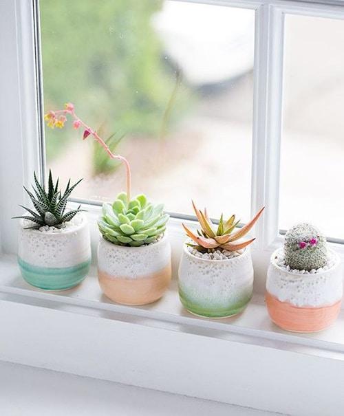 Ideas para decorar con plantas: alfeizar de la ventana con cactus