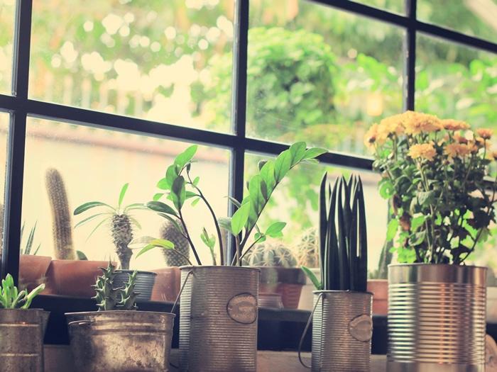 Decorar con plantas la mejor forma de darle un soplo de - Decoracion plantas interior ...