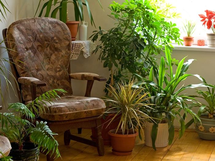 rincones-plantas-casa