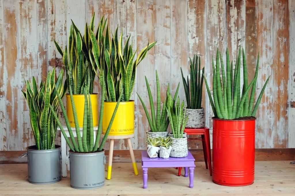 Fresco y natural ideas para decorar con macetas for Ideas para decorar macetas