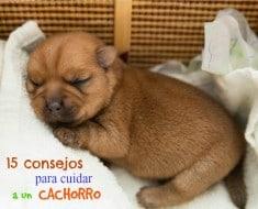 Newborn puppy is sleeping in a wicker basket