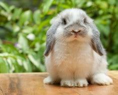 Alimentación conejos
