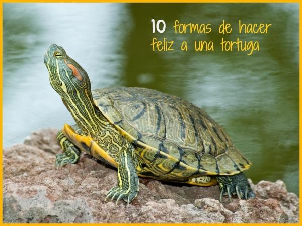 10 formas de hacer feliz a mi tortuga todo mascotas for Acuario tortugas
