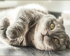 10-consejos-gatos-portada