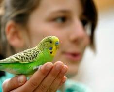 Mejores pájaros para tener de mascota