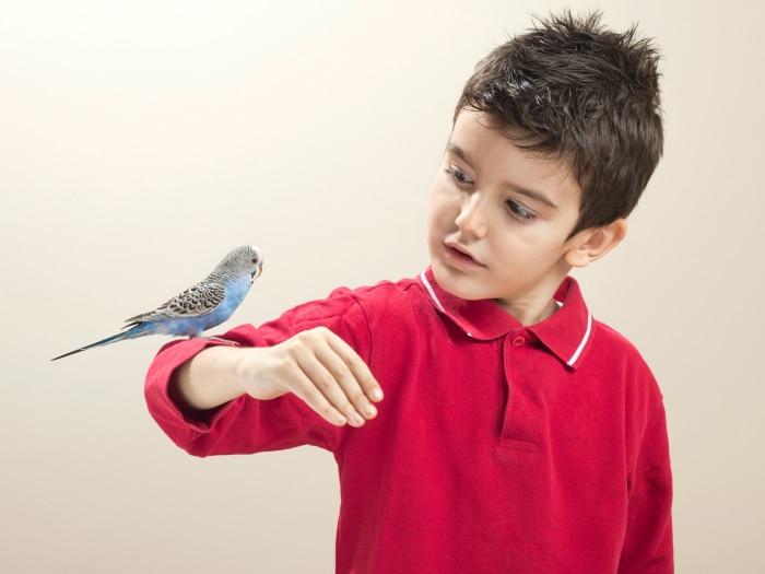 Mejores pájaros de mascota